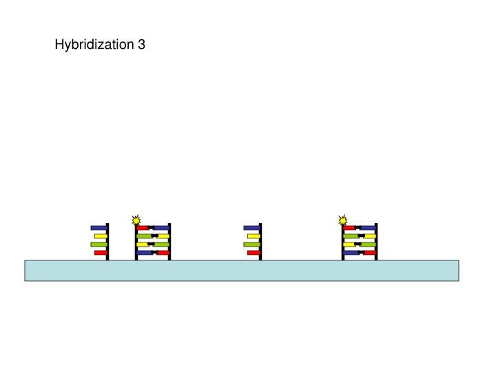 Hybridization 3