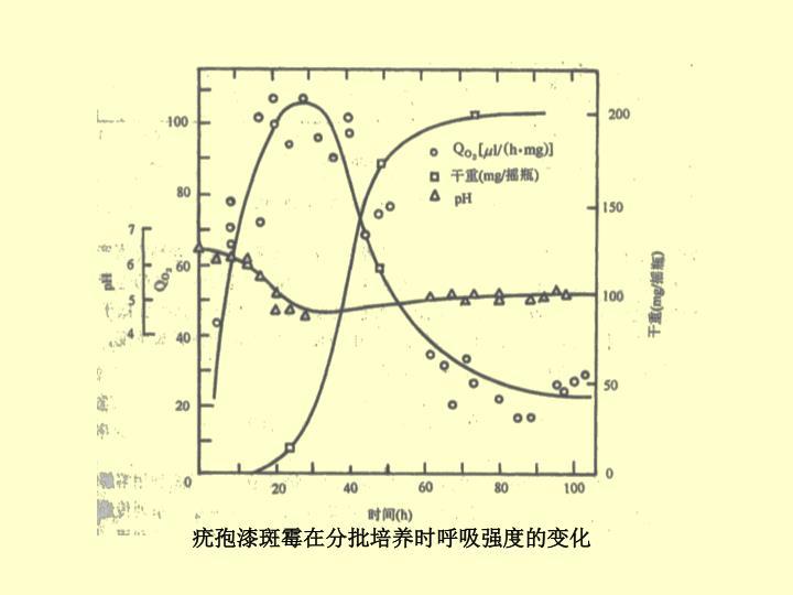 疣孢漆斑霉在分批培养时呼吸强度的变化