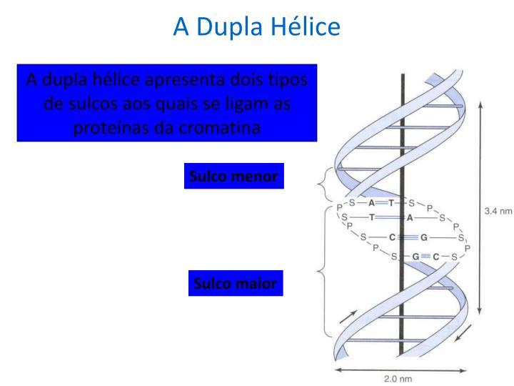 A Dupla Hélice