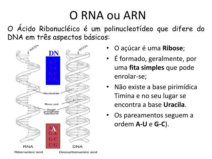 O RNA ou ARN
