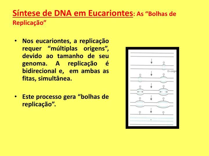 Síntese de DNA em Eucariontes
