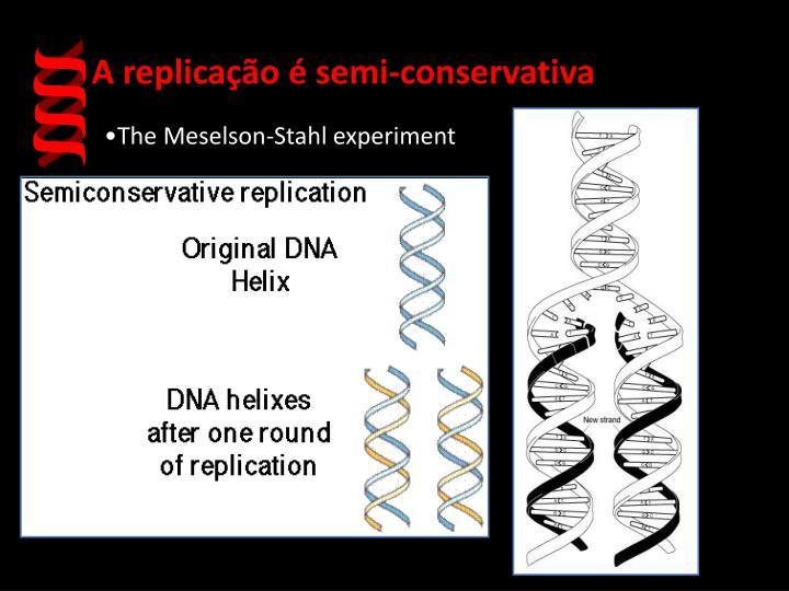 A replicação é semi-conservativa