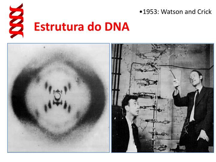 1953: Watson and Crick