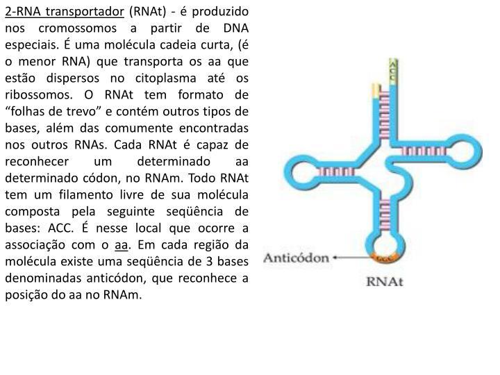 2-RNA transportador