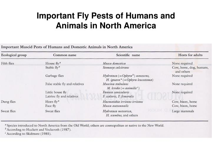 Important Fly Pests of Humans and Animals in North America