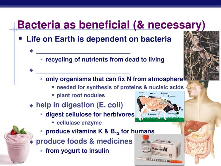 Bacteria as beneficial (& necessary)