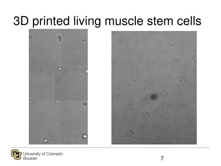 3D printed living muscle stem cells