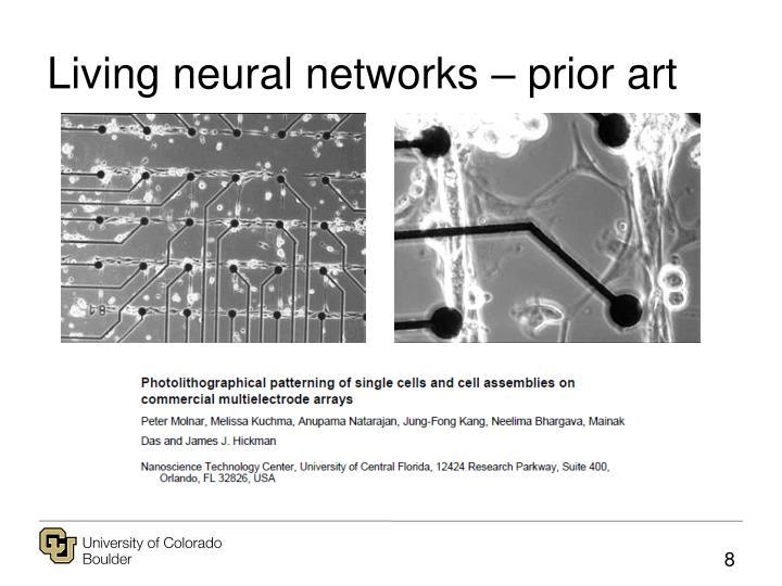 Living neural networks – prior art