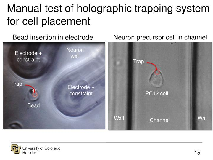 Manual test of holographic trapping system for cell placement