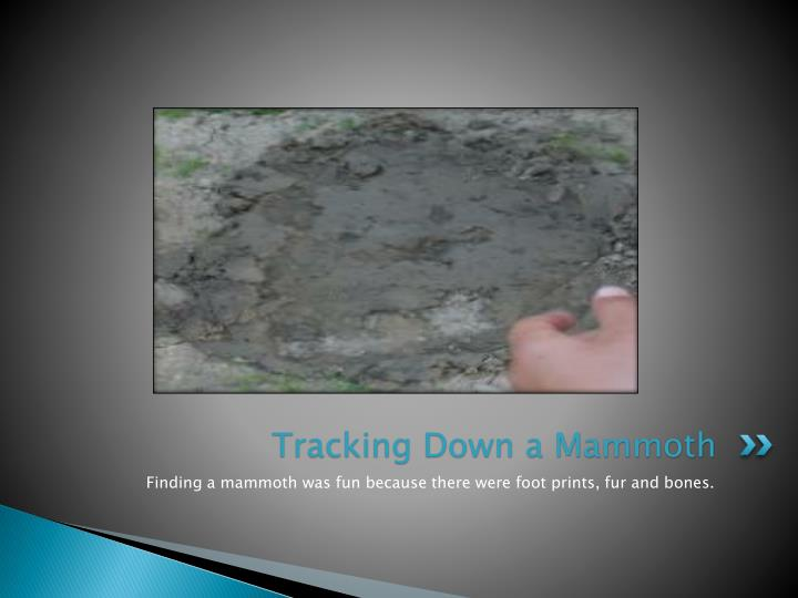 Tracking Down a Mammoth