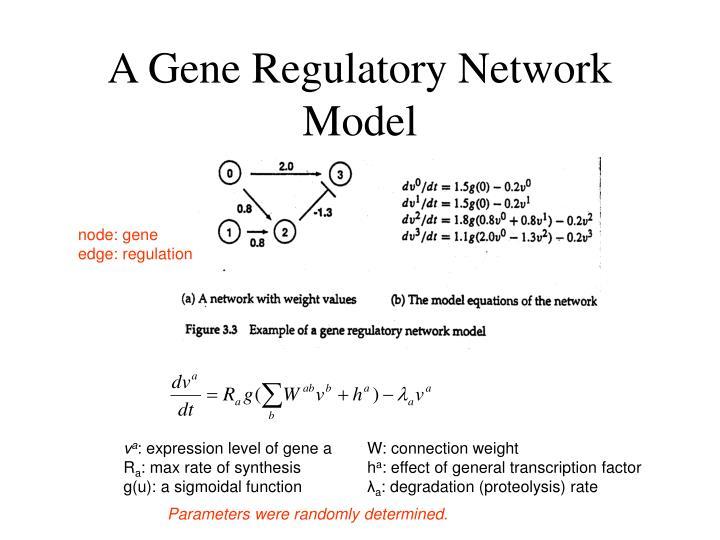 A Gene Regulatory Network Model
