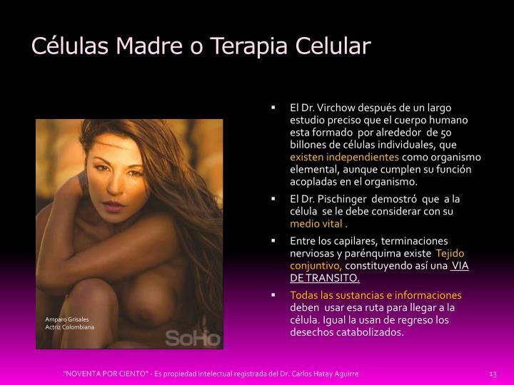 Células Madre o Terapia Celular