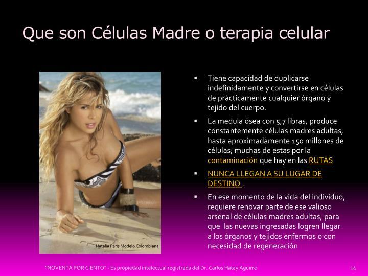 Que son Células Madre o terapia celular