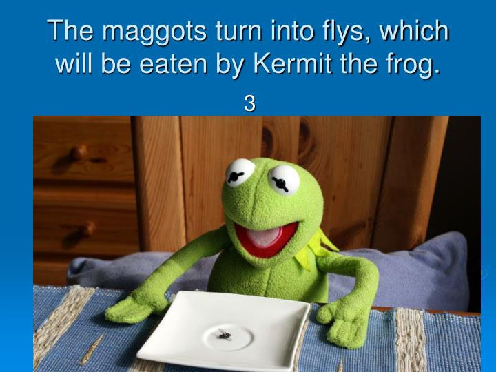 The maggots turn into flys, which will be eaten by Kermit the frog.