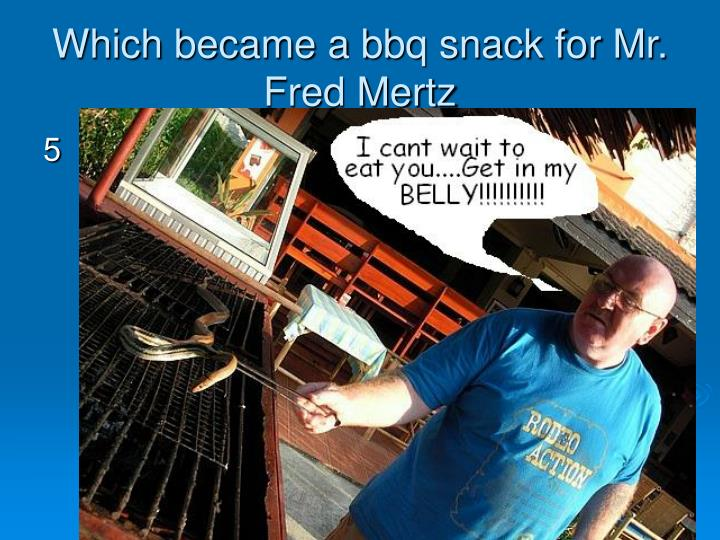 Which became a bbq snack for Mr. Fred Mertz
