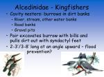 alcedinidae kingfishers11