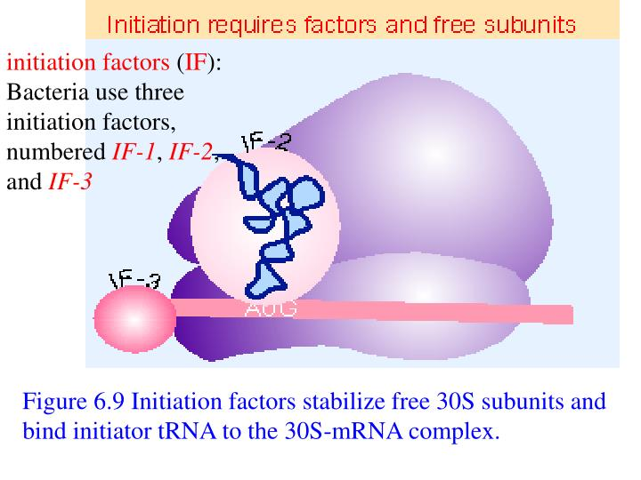 initiation factors