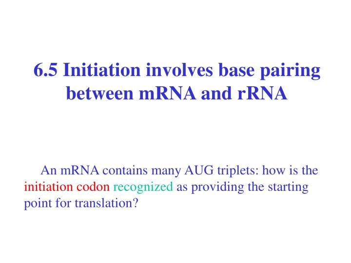6.5 Initiation involves base pairing between mRNA and rRNA