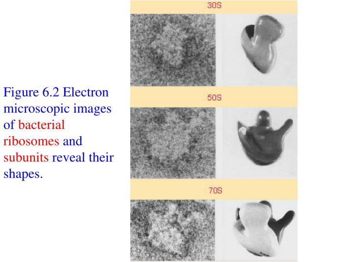 Figure 6.2 Electron microscopic images of