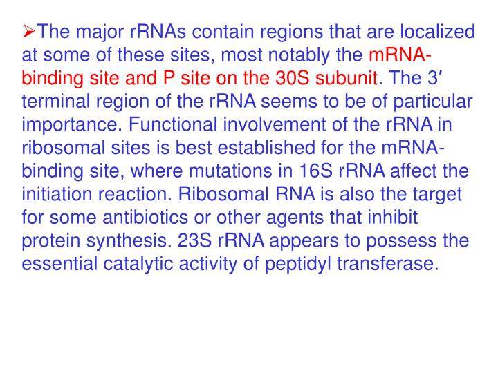 The major rRNAs contain regions that are localized at some of these sites, most notably the