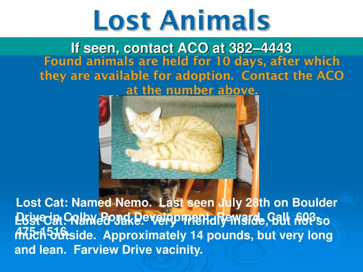 Lost Cat: Named Nemo.  Last seen July 28th on Boulder Drive in Colby Pond Development. Reward. Call  603-475-1516.