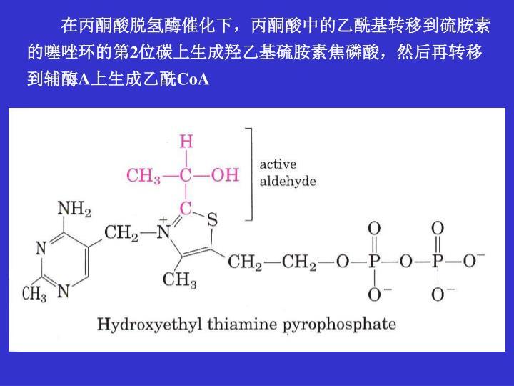 在丙酮酸脱氢酶催化下,丙酮酸中的乙酰基转移到硫胺素的噻唑环的第