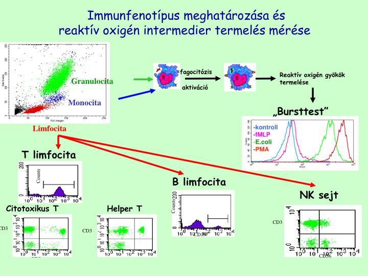 Immunfenotípus meghatározása és