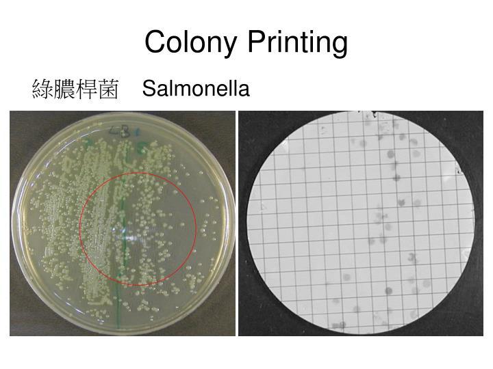 Colony Printing