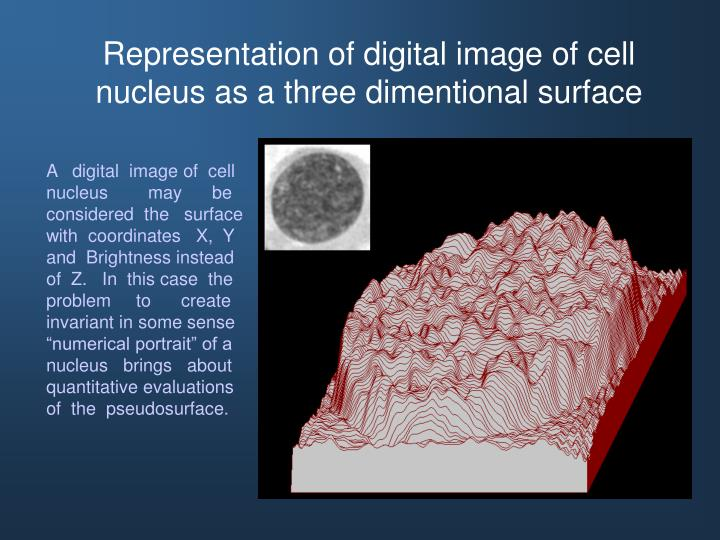 Representation of digital image of cell nucleus as a three dimentional surface