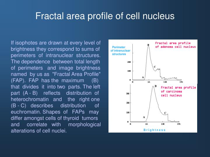 Fractal area profile of cell nucleus