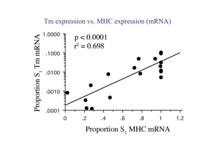 Tm expression vs. MHC expression (mRNA)