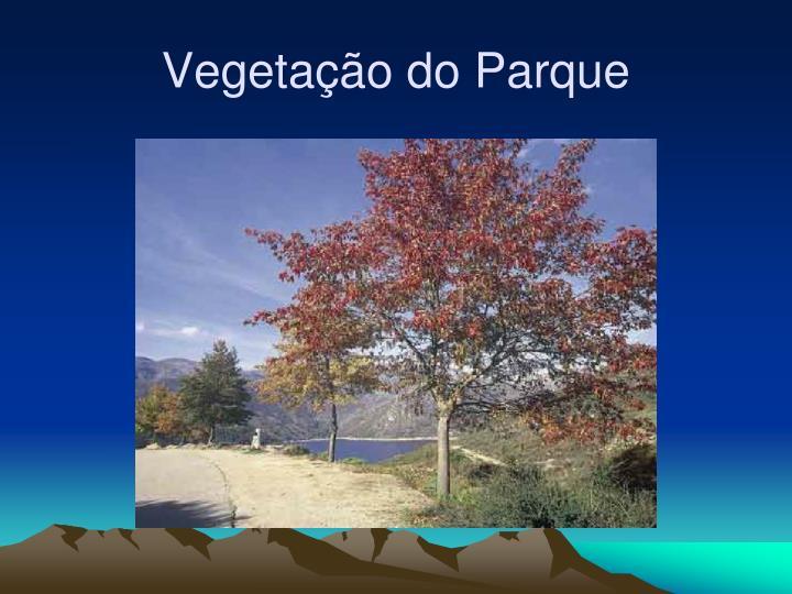 Vegetação do Parque