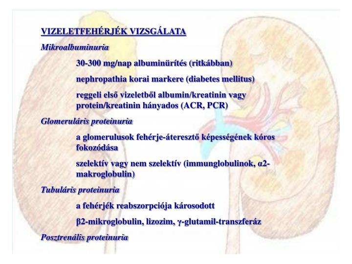 VIZELETFEHÉRJÉK VIZSGÁLATA