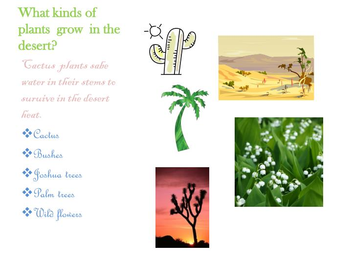 What kinds of  plants  grow  in the  desert?