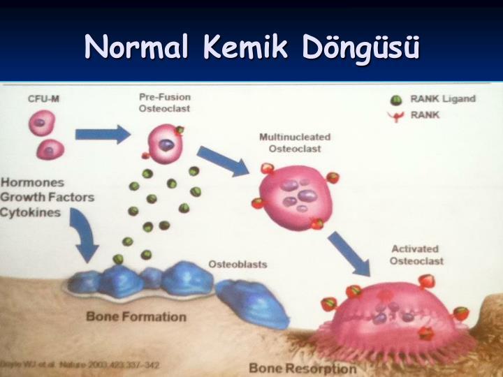 Normal Kemik Döngüsü