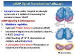 camp signal transduction pathways