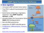 camp signal transduction pathways2