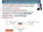 intracellular signal transduction pathways