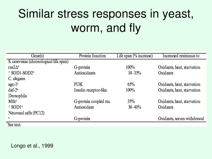 Similar stress responses in yeast, worm, and fly
