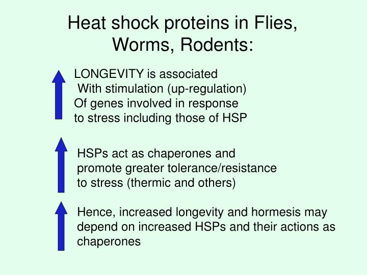 Heat shock proteins in Flies, Worms, Rodents: