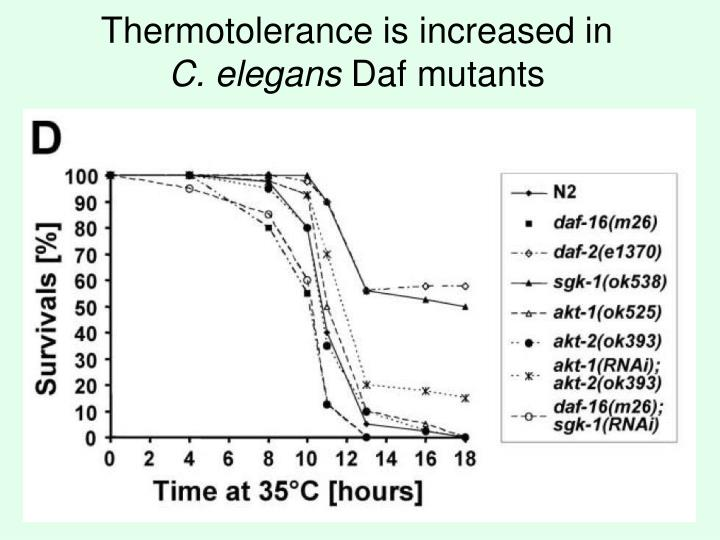 Thermotolerance is increased in