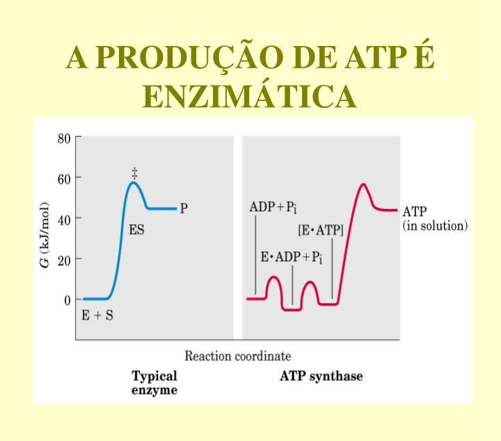 A PRODUÇÃO DE ATP É ENZIMÁTICA