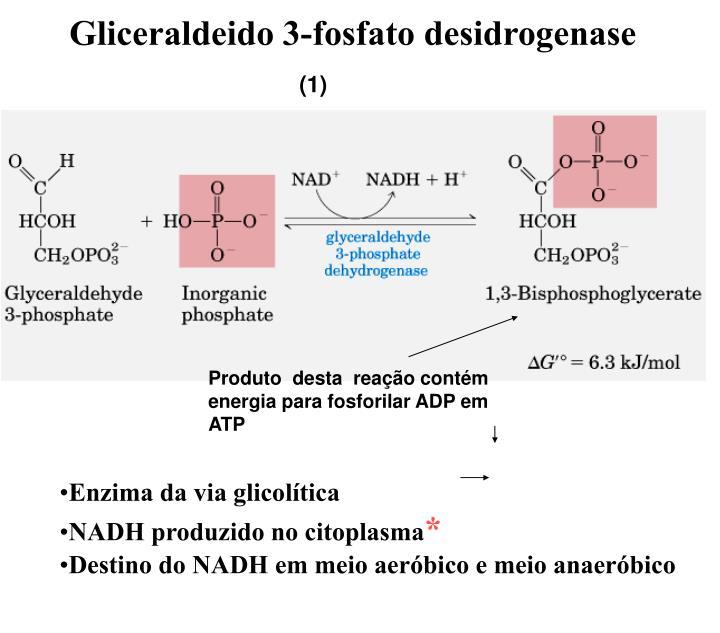 Gliceraldeido 3-fosfato desidrogenase