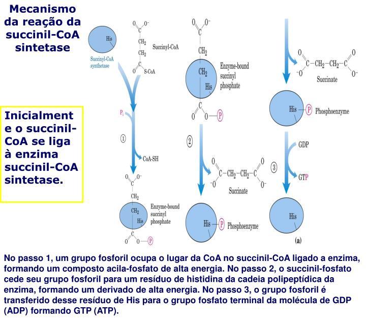 Mecanismo da reação da succinil-CoA sintetase