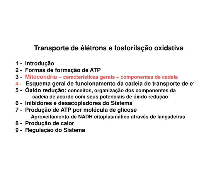 Transporte de élétrons e fosforilação oxidativa