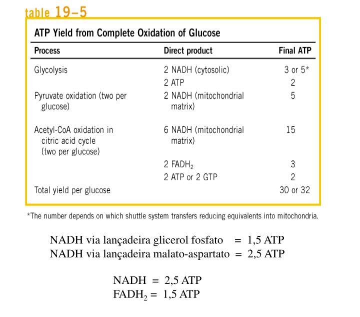 NADH via lançadeira glicerol fosfato    =  1,5 ATP