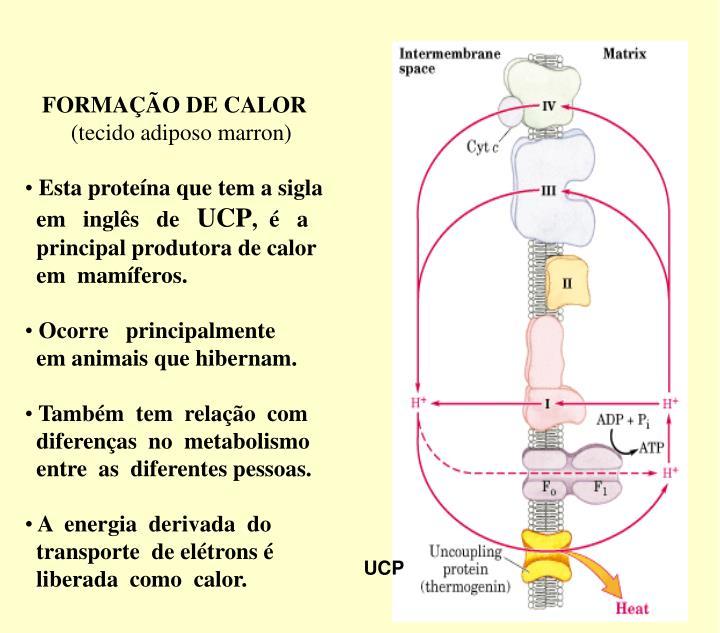 FORMAÇÃO DE CALOR