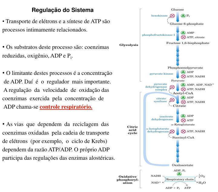 Regulação do Sistema