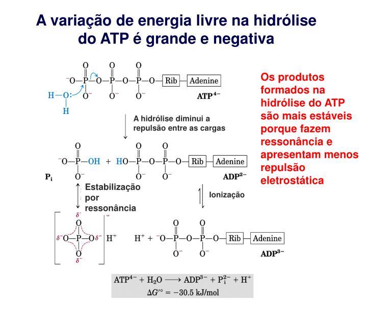 A variação de energia livre na hidrólise do ATP é grande e negativa
