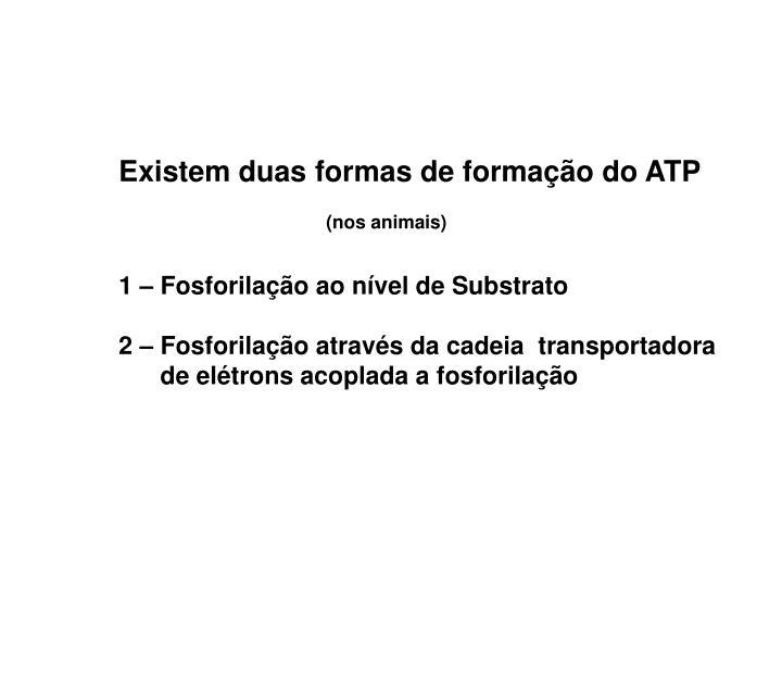 Existem duas formas de formação do ATP
